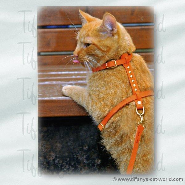 katzengeschirr katzenleine nubia hundehalsb nder online kaufen hundeleinen. Black Bedroom Furniture Sets. Home Design Ideas