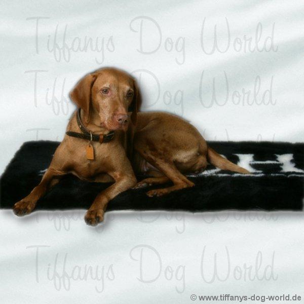 hundedecke posh vet rug hundehalsb nder online kaufen hundeleinen hundegeschirre. Black Bedroom Furniture Sets. Home Design Ideas