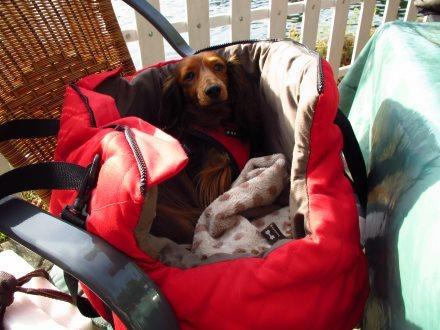 tragetasche promenade hundehalsb nder online kaufen hundeleinen hundegeschirre. Black Bedroom Furniture Sets. Home Design Ideas