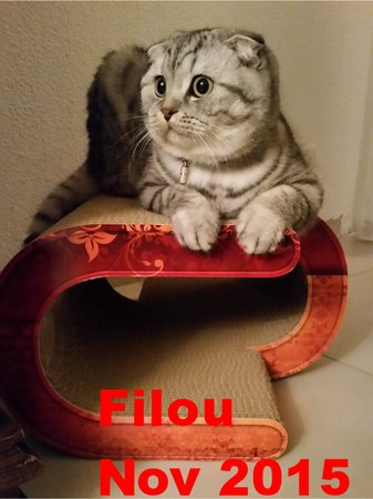 "Name: Filou Rasse: Scottish Fold Katzenkratzmöbel ""LaVague""\\n\\n06.11.2015 23:22"