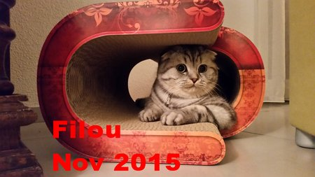 "Name: Filou Rasse: Scottish Fold Katzenkratzmöbel ""LaVague""\\n\\n06.11.2015 23:24"